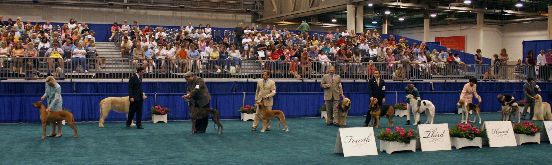 Dog Show Rhodesian Ridgeback