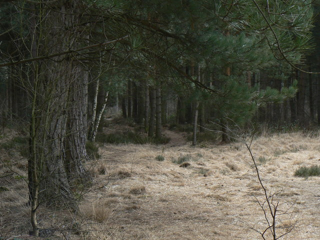 Allerthorpe Common - geograph.org.uk - 730871