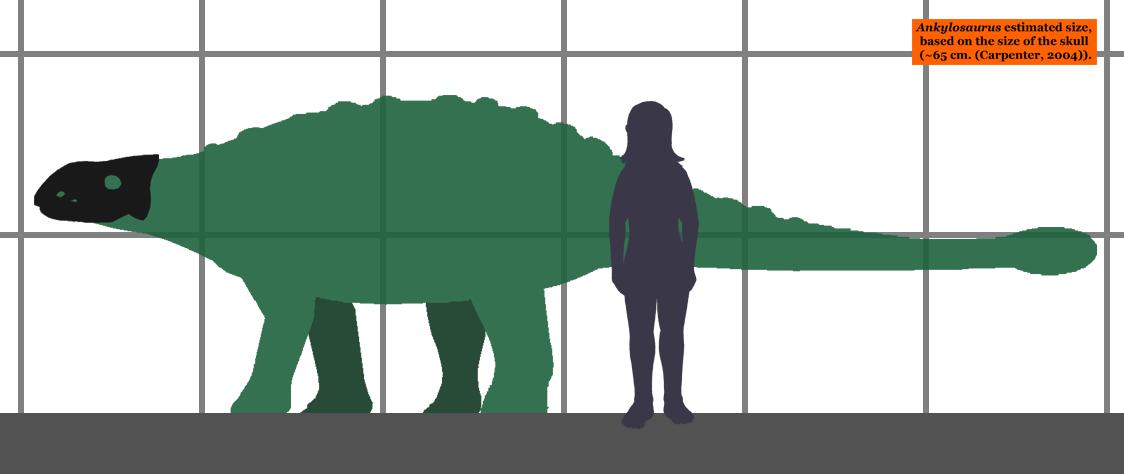 [Image: Ankylosaurus_estimated_size_01.png]