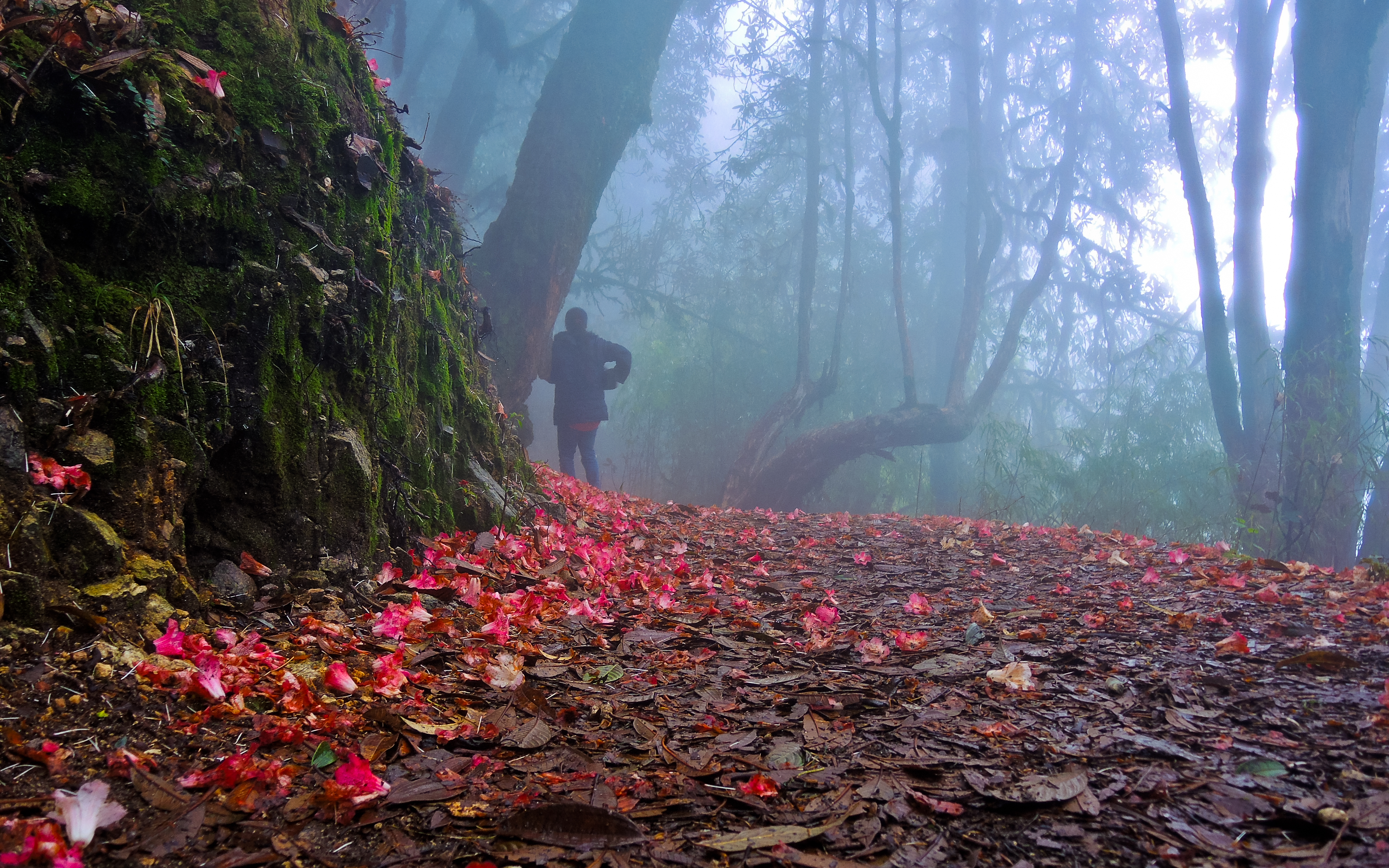Image result for barse rhododendron sanctuary