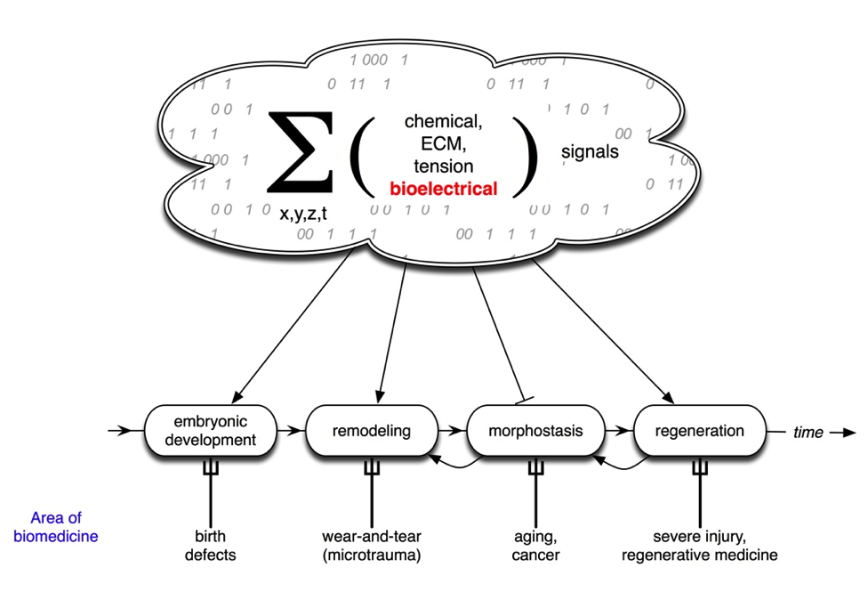 bioelectricity wikipedia