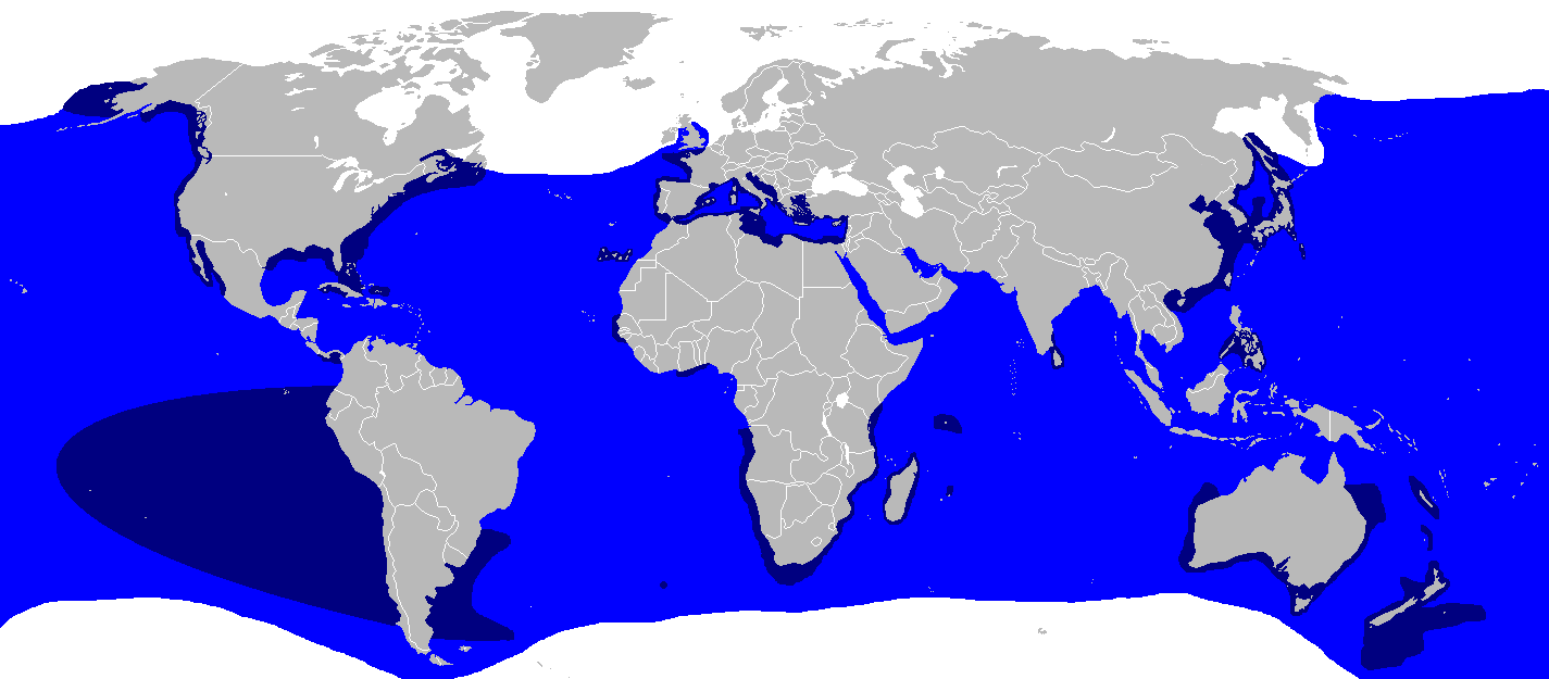 Carcharodon carcharias distmap 2.png