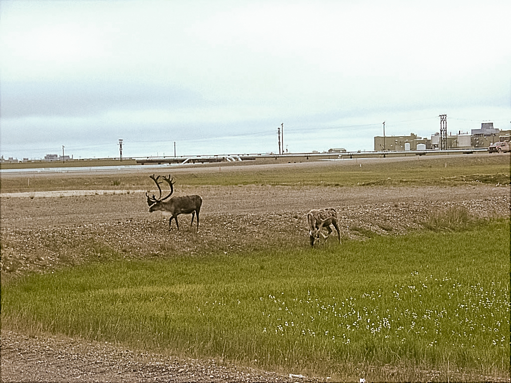 prudhoe bay online hookup & dating In the prudhoe bay area,  thus the recent warming of permafrost there was primarily a warming of winter  radiocarbon dating indicates that some of .