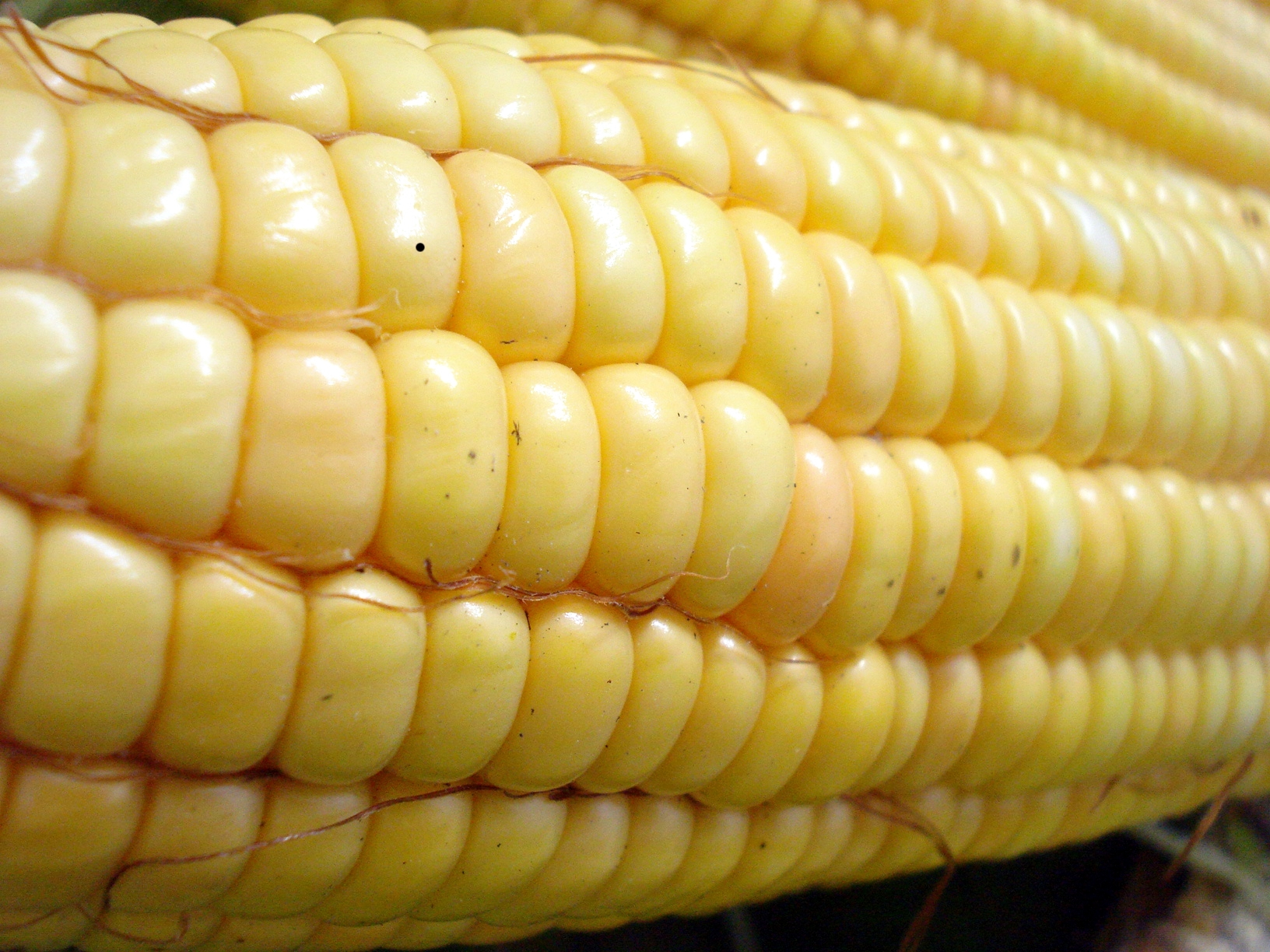 Are Genetically Modified Foods Healthy To Eat