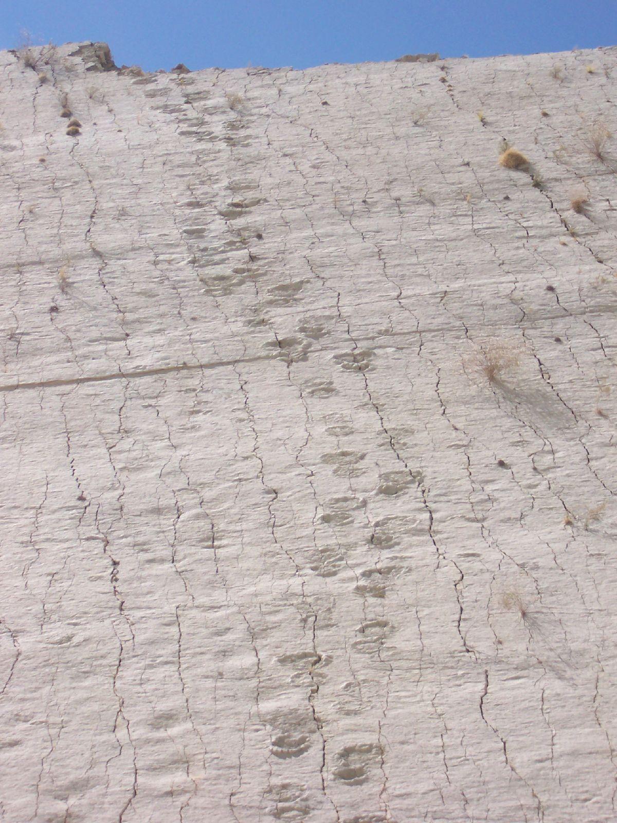 Dinosaur tracks in Bolivia 1.jpg