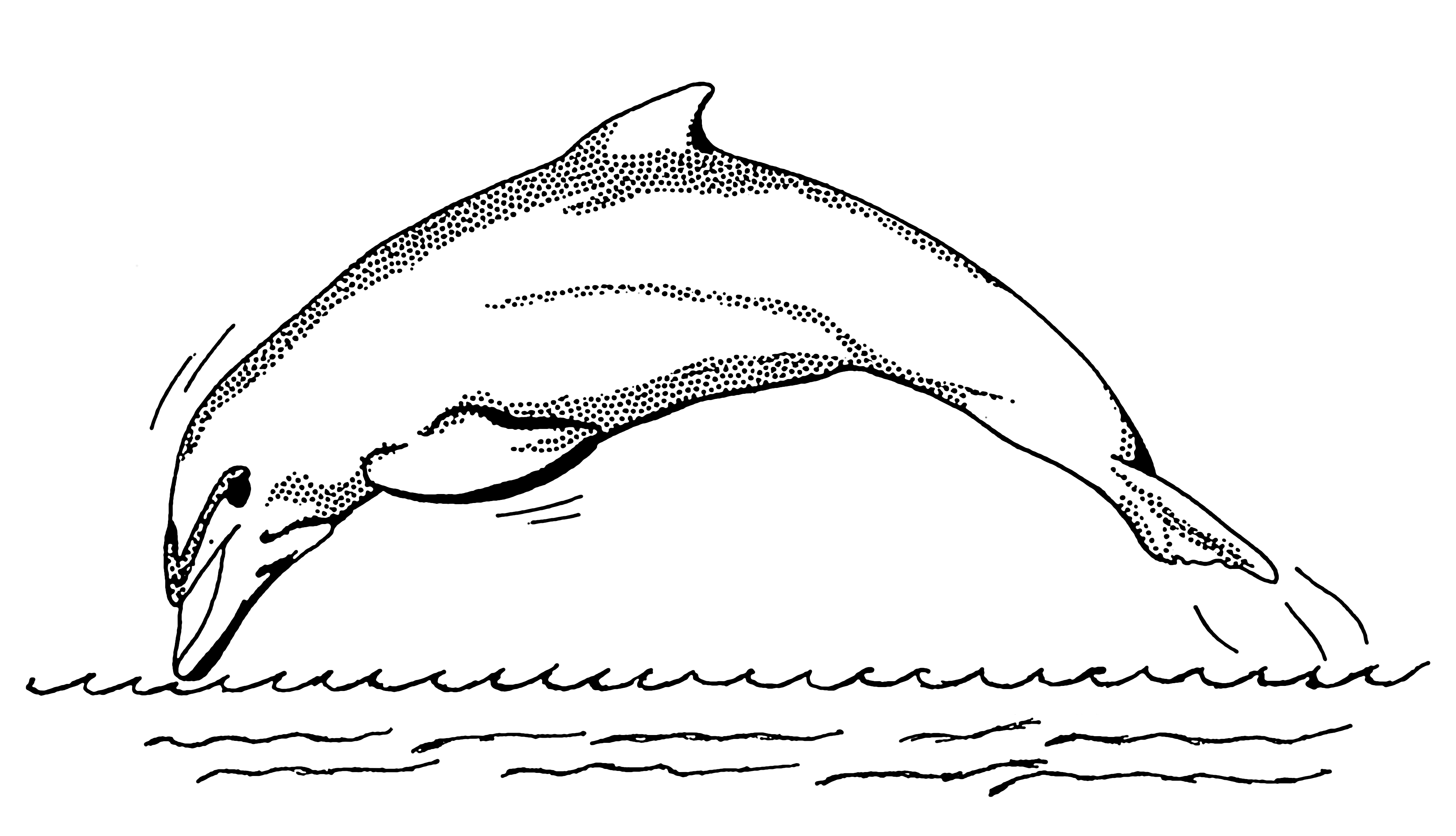 Line Art Dolphin : File dolphin psf wikimedia commons