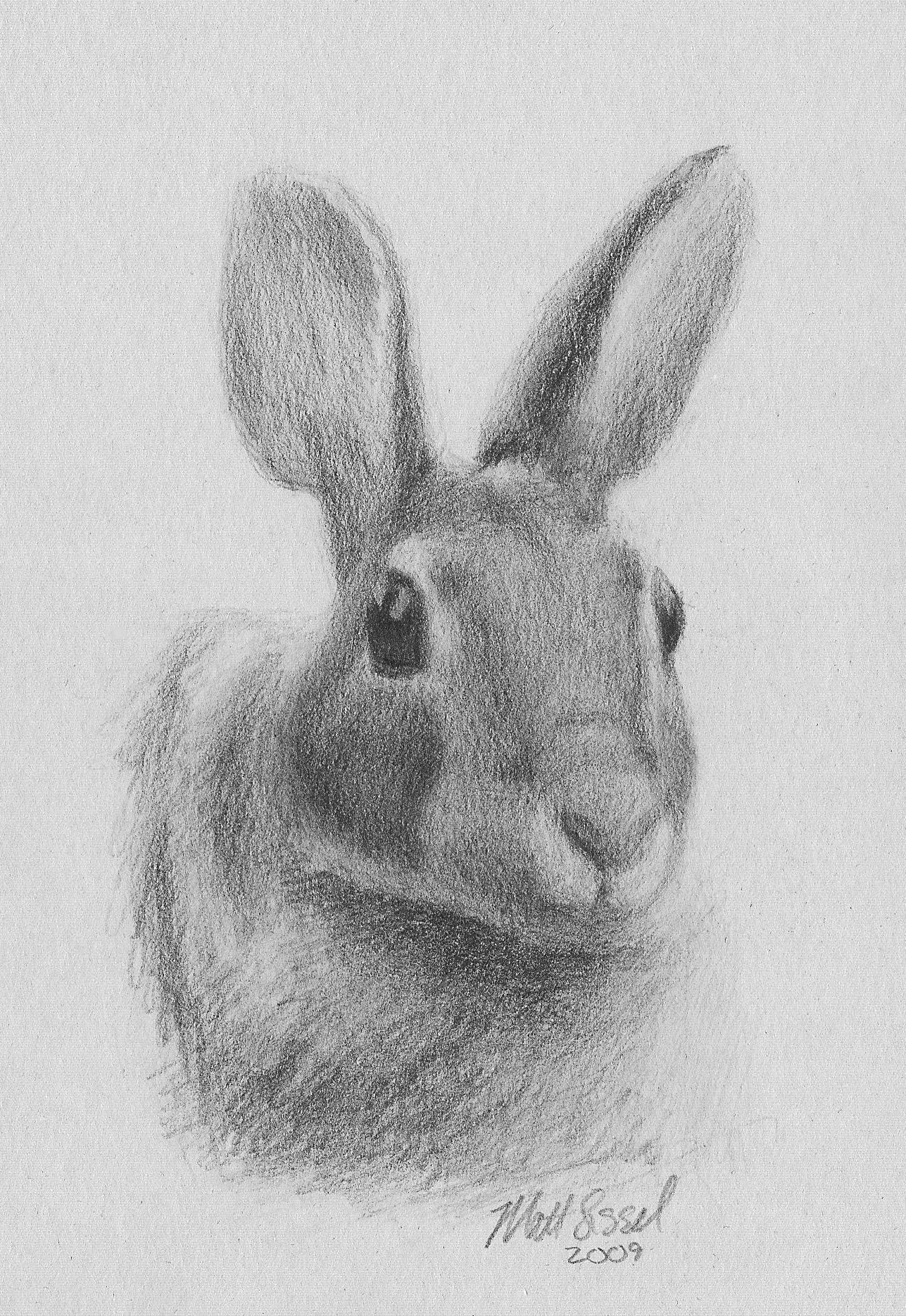 Rabbit pictures for drawing