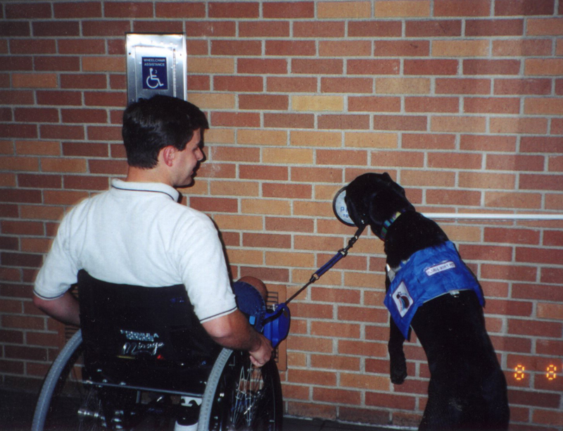 Guide Dog Facts Uk