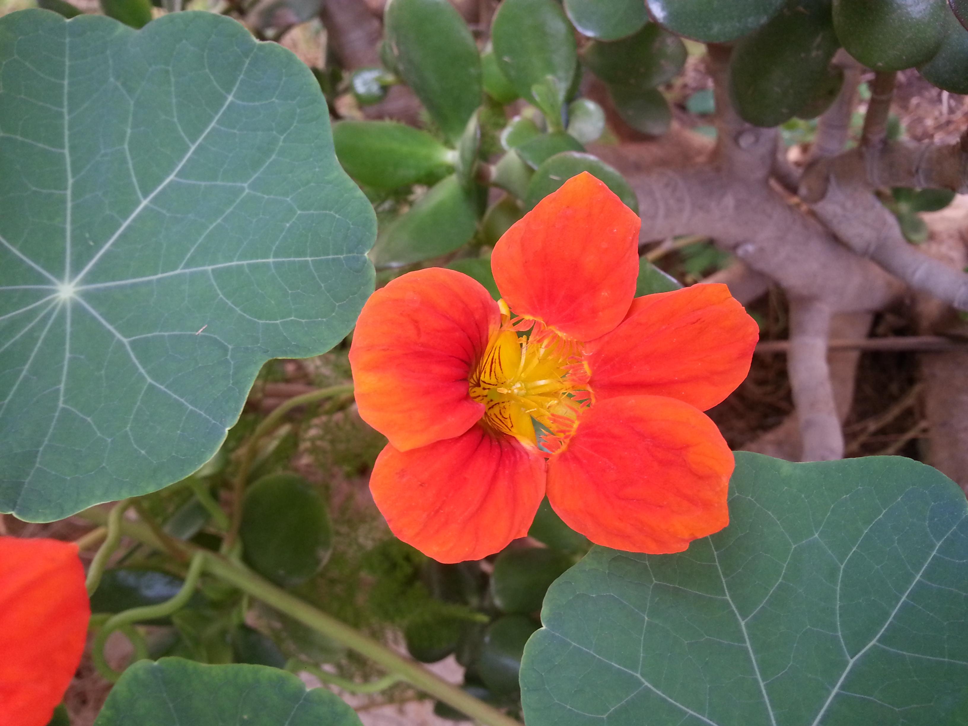 File Fleurs De Jardin 7 Jpg Wikimedia Commons