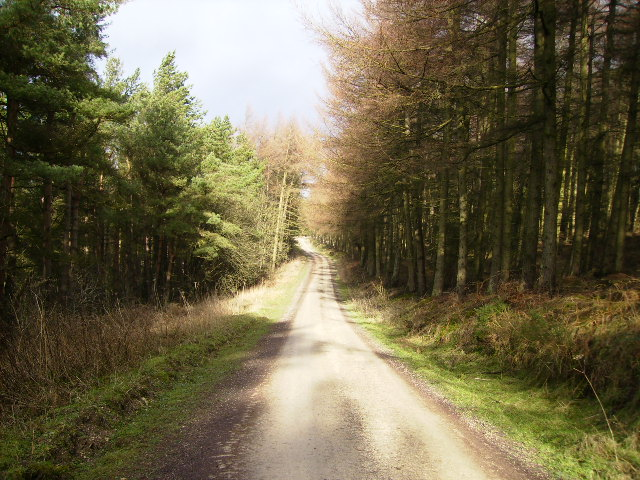 Forest road in Broxa Forest near Broad Head Farm - geograph.org.uk - 337385