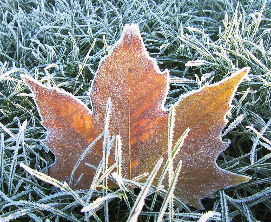 frost - Wiktionary