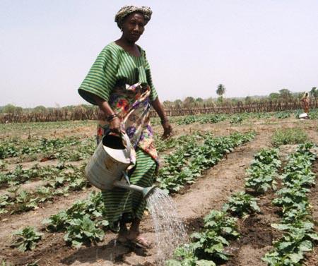 Filer forum file women agricultural development africa