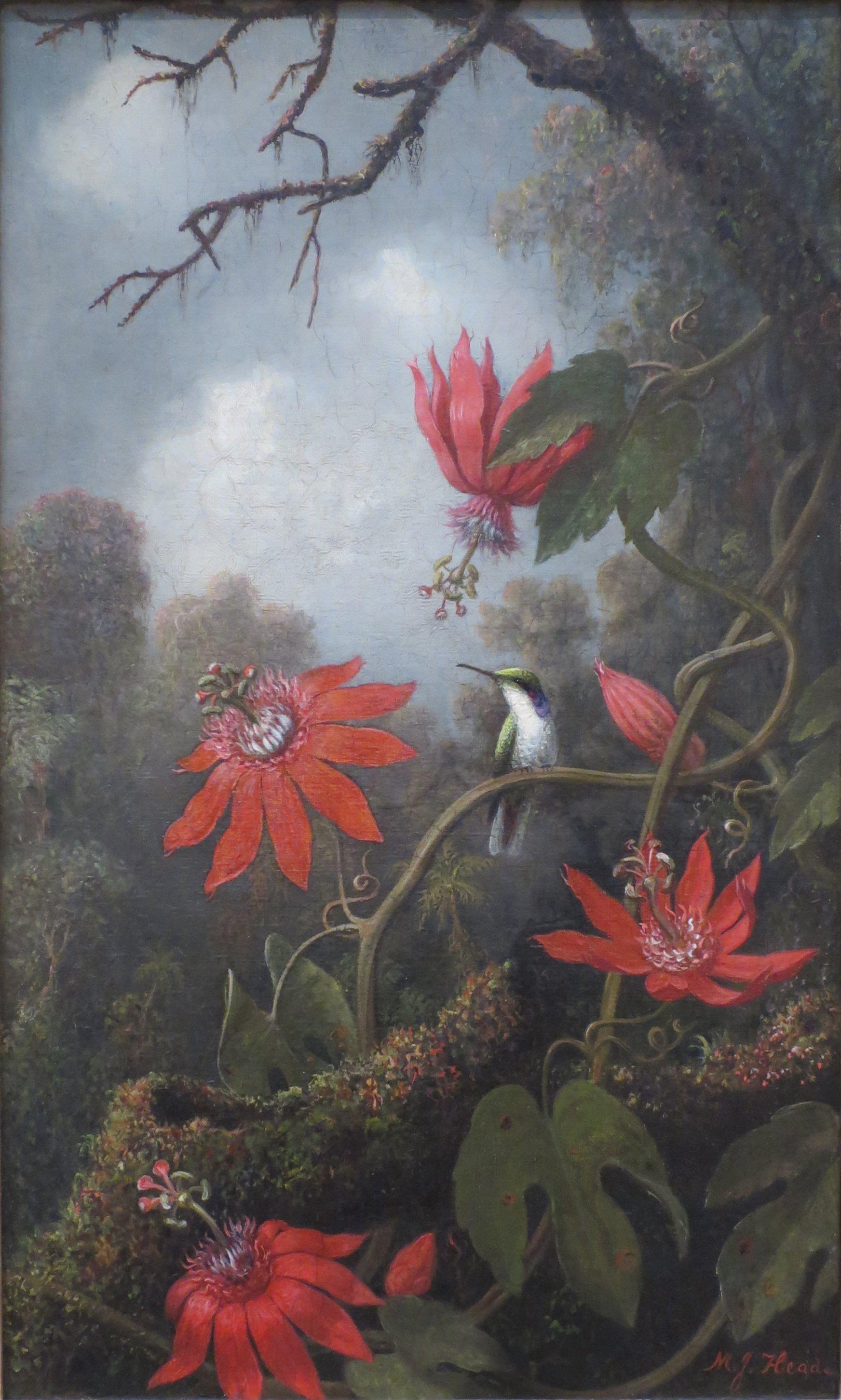 File:Heade Martin Johnson Hummingbird And Passionflowers.jpg