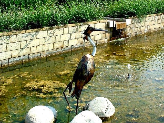 Heron in Durham Botanic Gardens