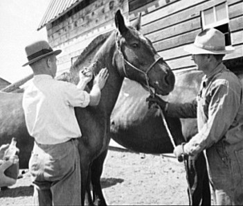 File:Horse-Vaccination.jpeg