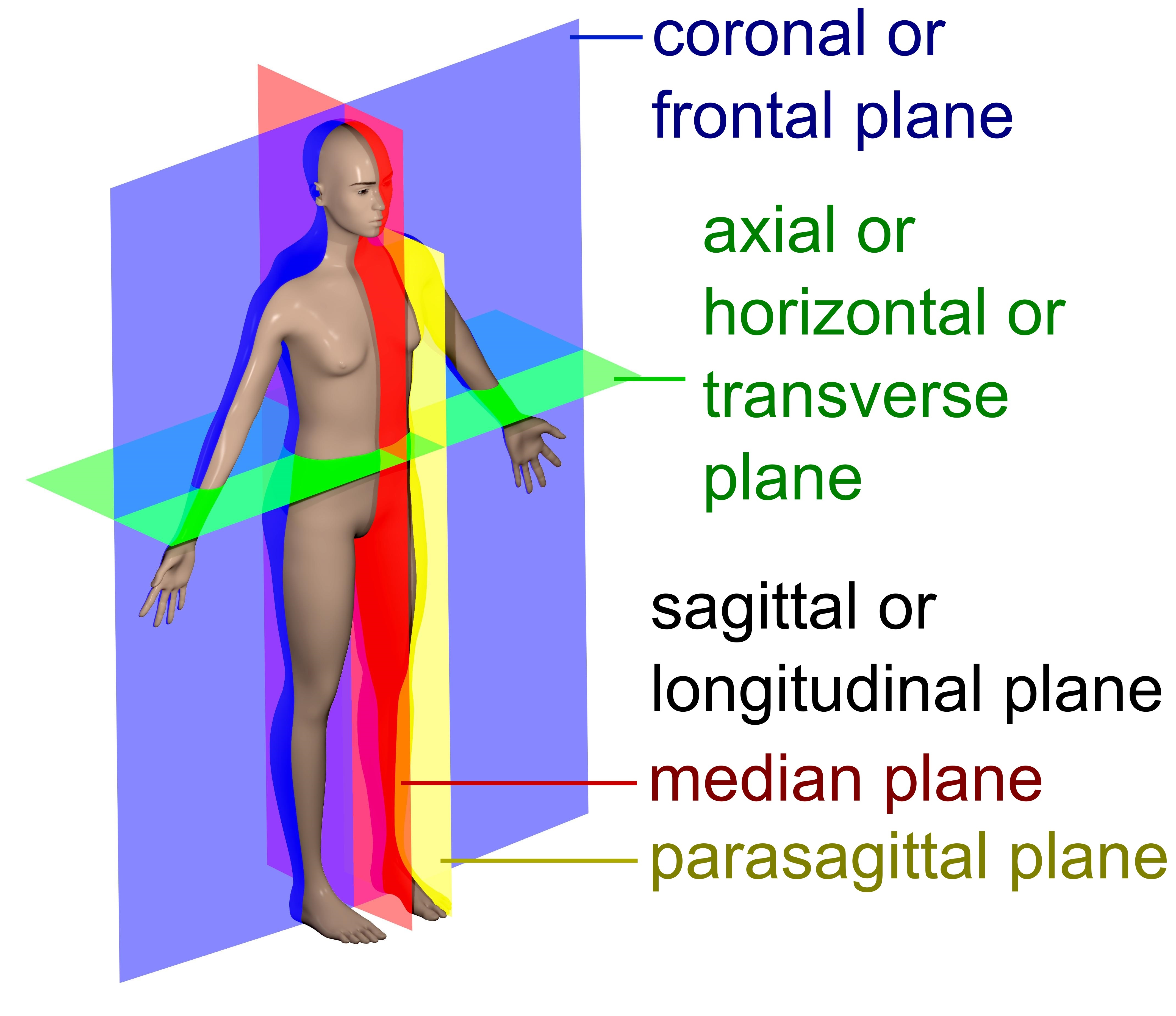 Para definition medical terminology