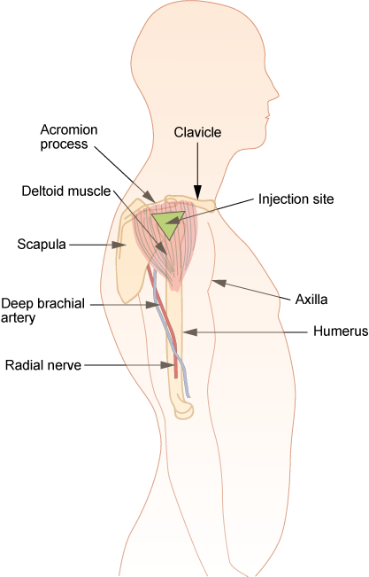 File:Im-deltoid.png - Wikimedia Commons