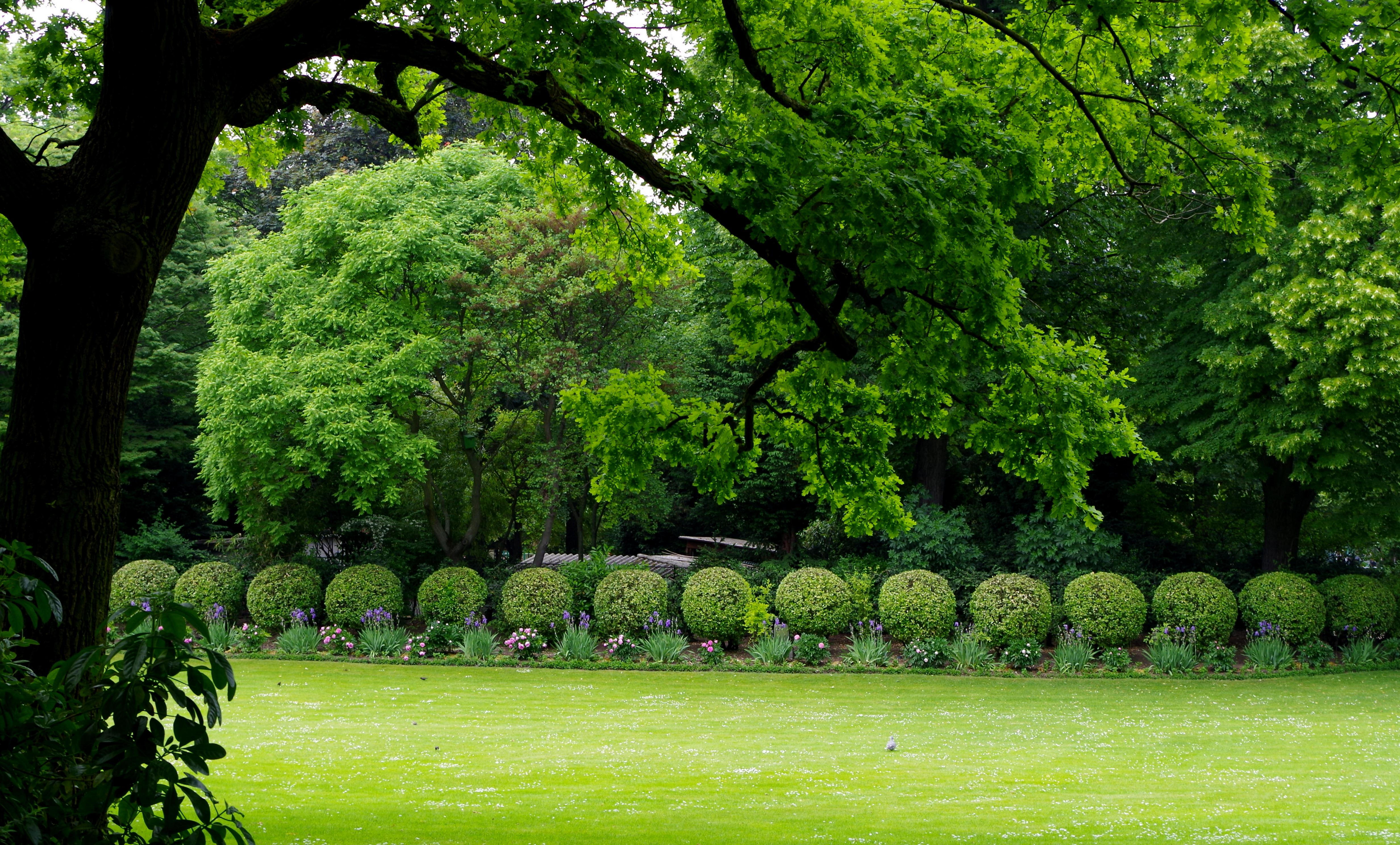file jardin du luxembourg vue sur une pelouse et