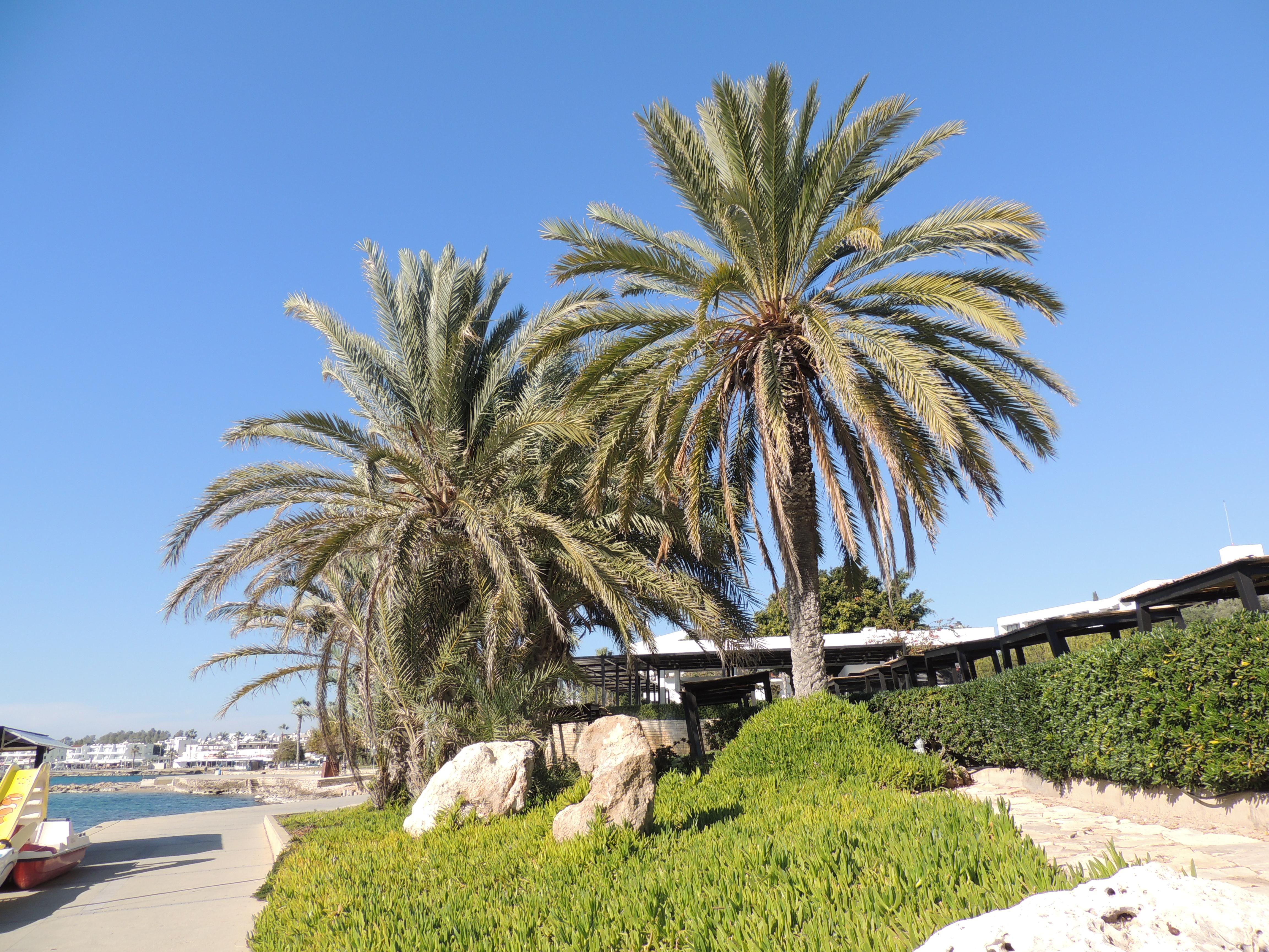 gratuit datation Paphos Chypre plus de 50 en ligne datant de l'Australie