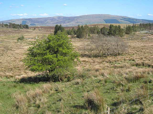 Moorland and scattered trees at Ardlougher - geograph.org.uk - 1607445