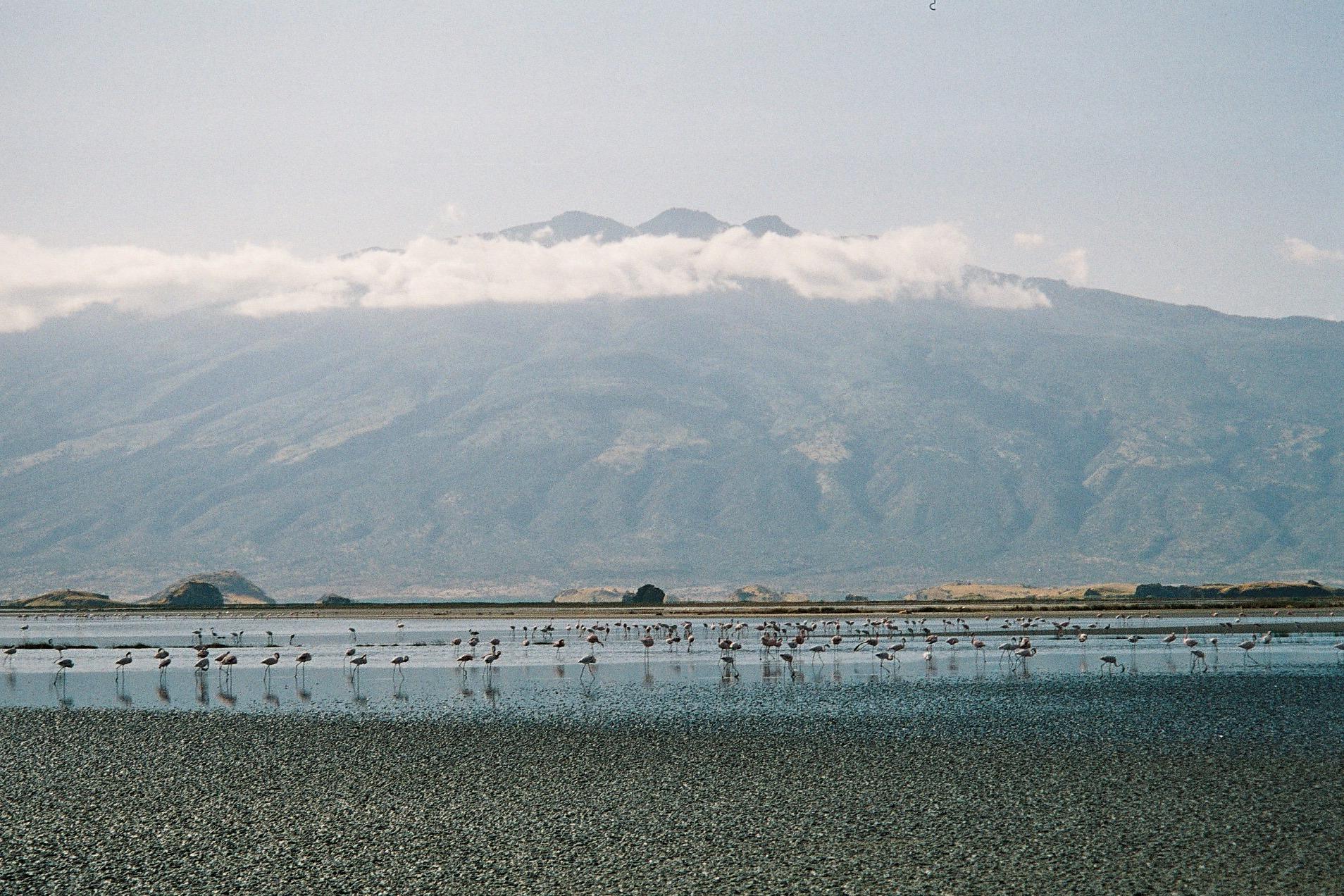 Lago Natrón (Tanzania). Sus aguas son tan alcalinas (pH 10.5), y tan cáusticas, que los únicos seres vivos capaces de sobrevivir en este ambiente son los peces Alcolapia alcalica y los flamencos.