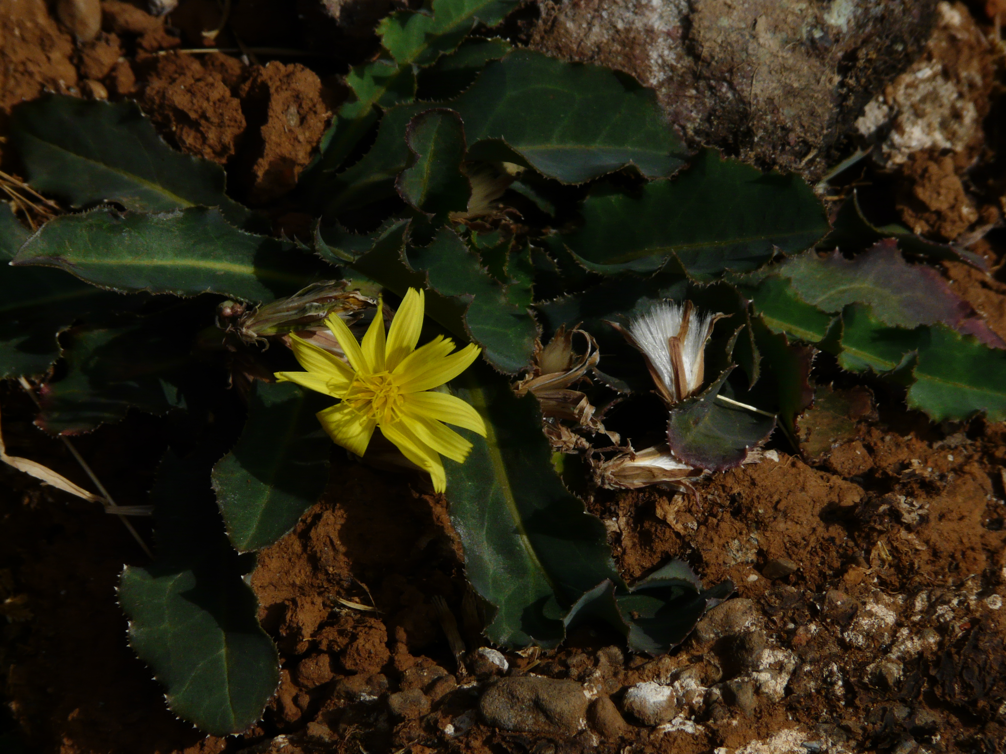 Filepathari marathi 3127764126g wikimedia commons filepathari marathi 3127764126g izmirmasajfo