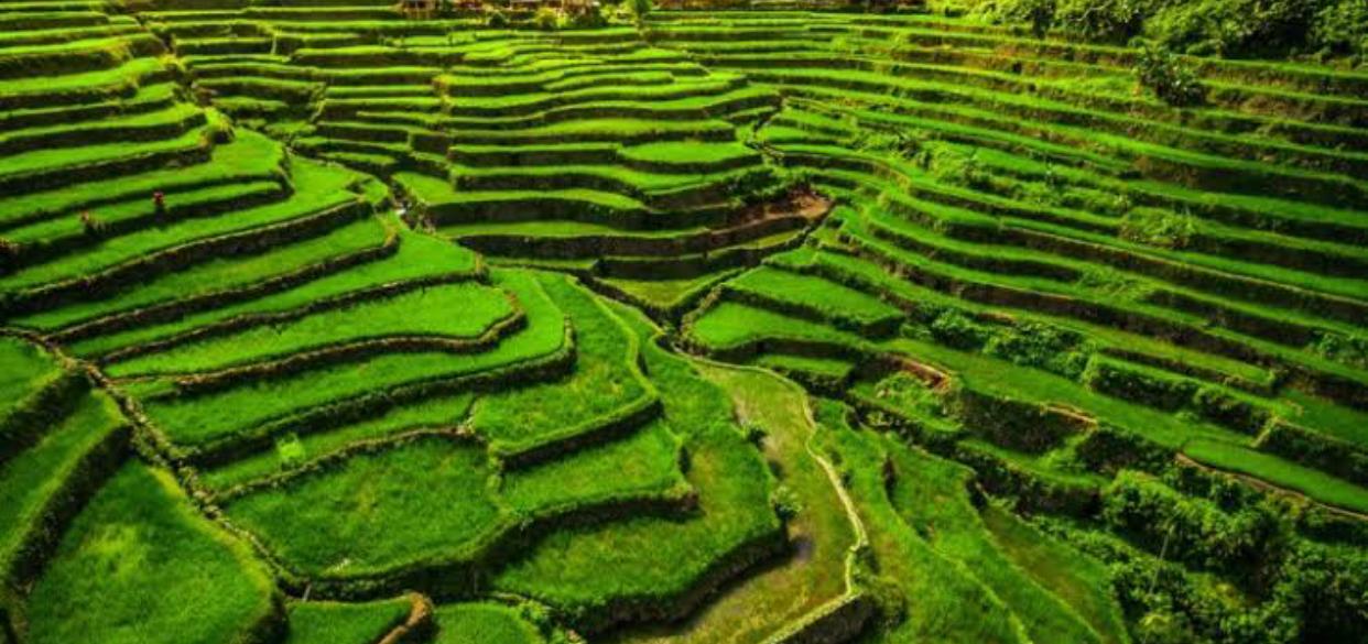 https://upload.wikimedia.org/wikipedia/commons/0/03/Philippine_Rice_Terraces.jpg