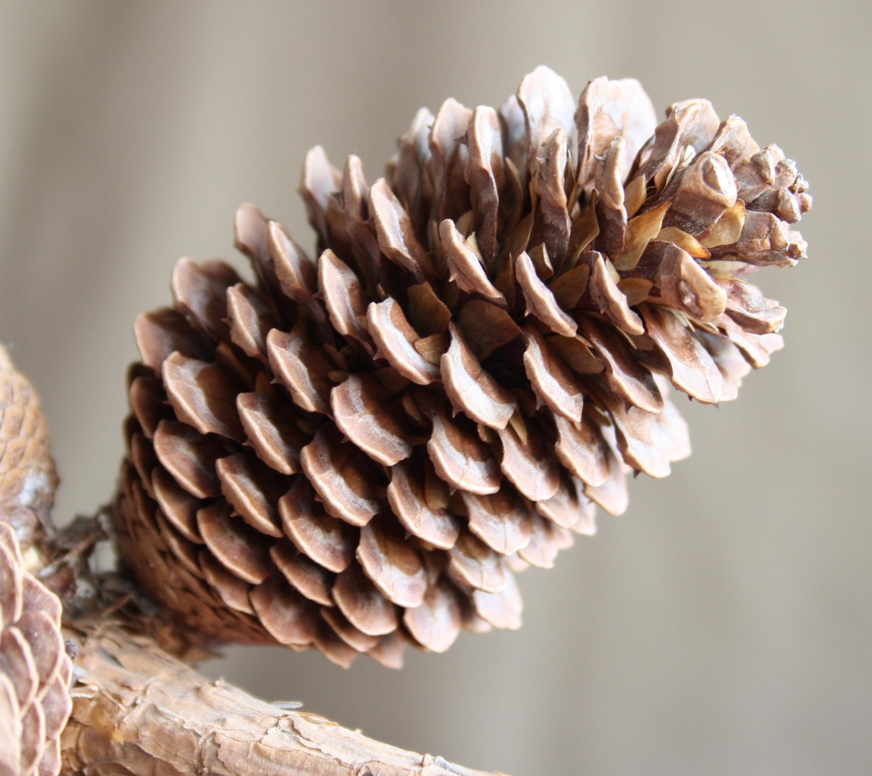 Christmas Crafts With Nature
