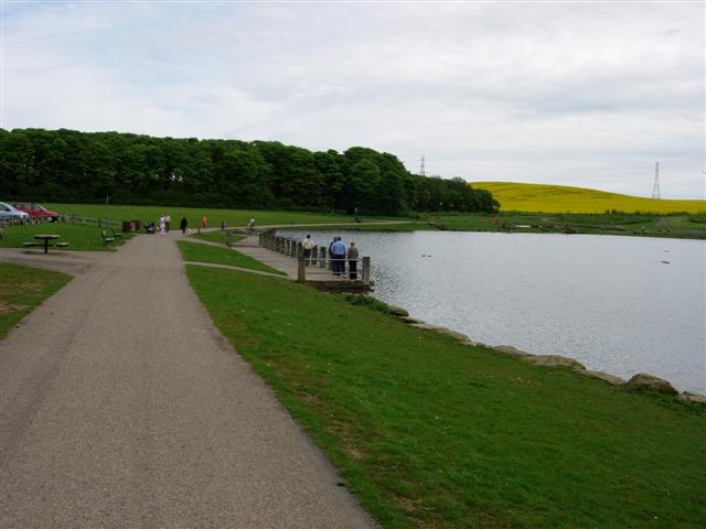 Pond in Herrington Country Park - geograph.org.uk - 172825