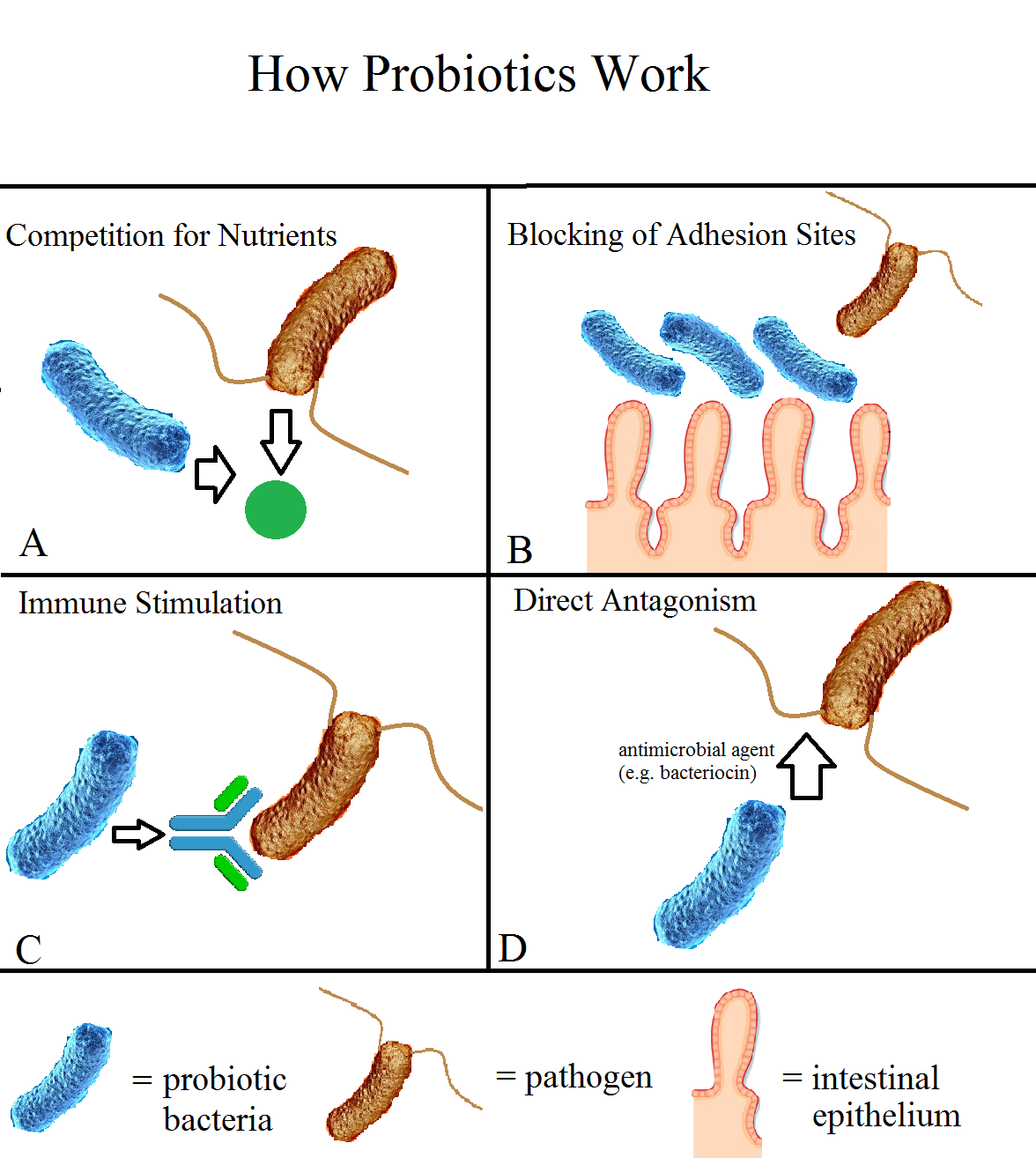 Image result for probiotic