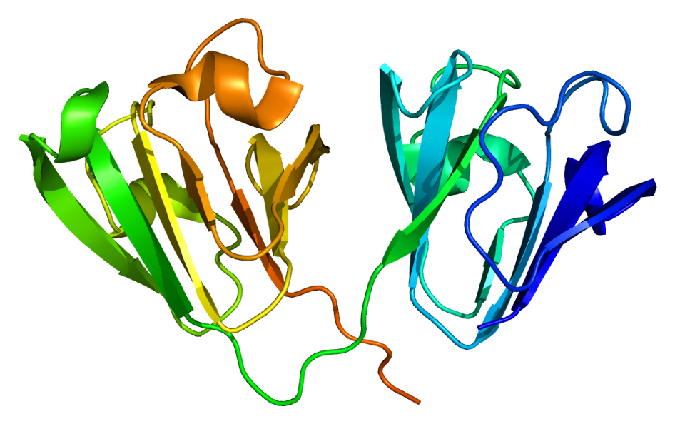 Crystallin, gamma D - Wikipedia