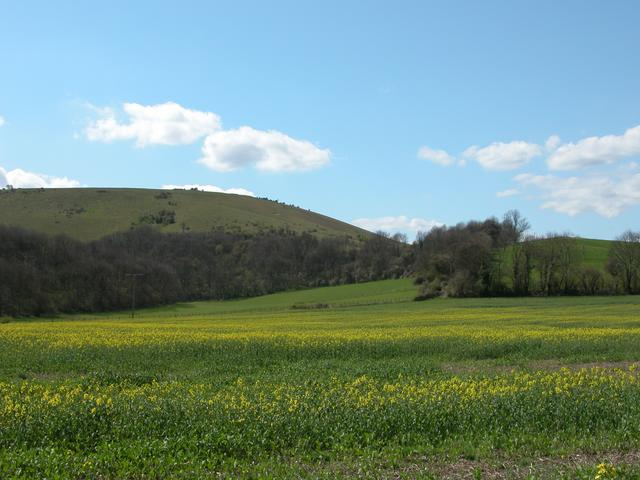 Rakefield Hanger at the foot of Butser Hill - geograph.org.uk - 2652