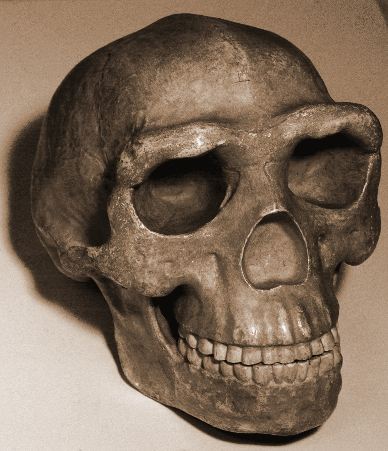 Skull pekingman.jpg