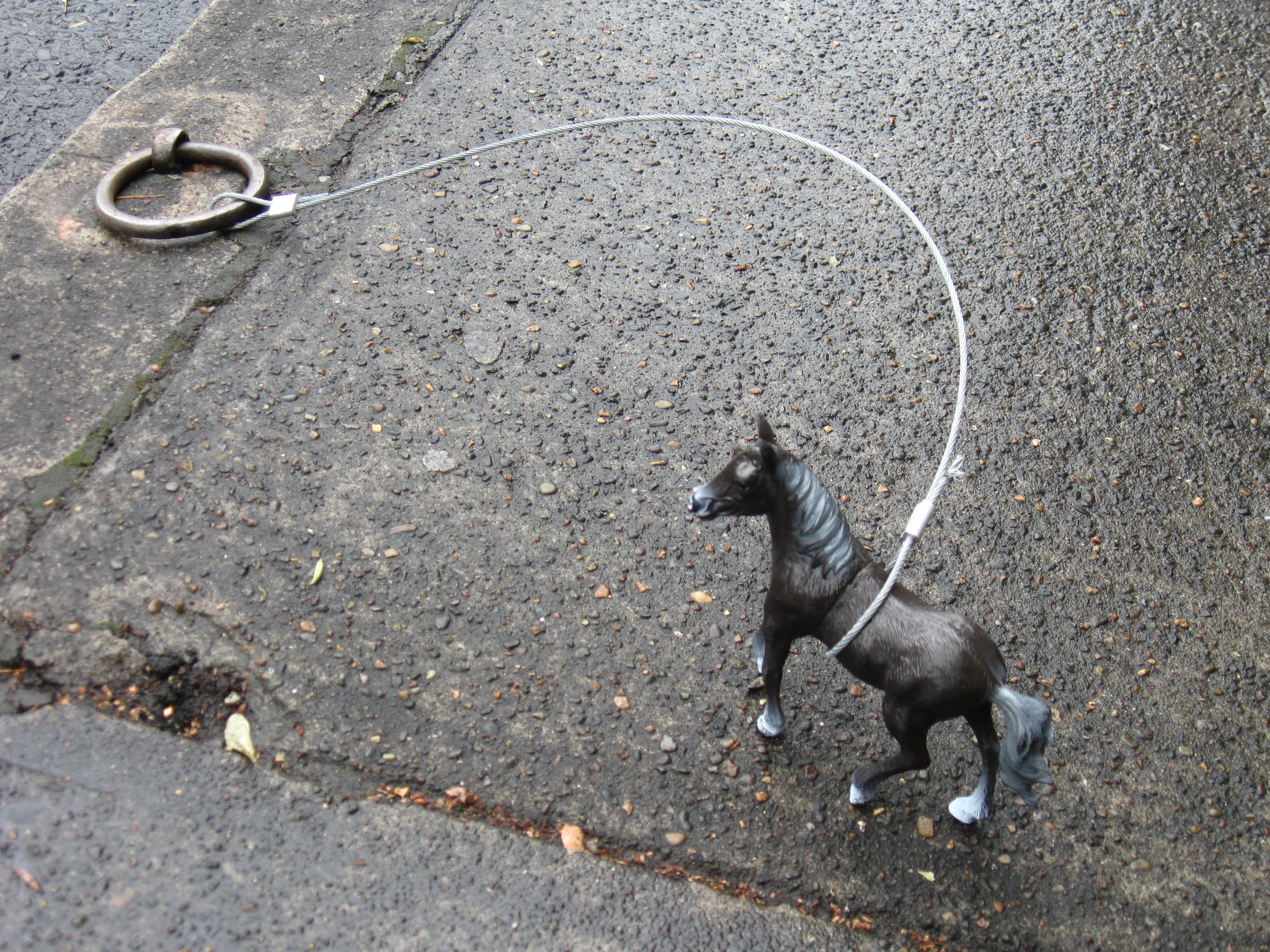 File:Tethered horse on 9th, Portland, Oregon jpg - Wikimedia