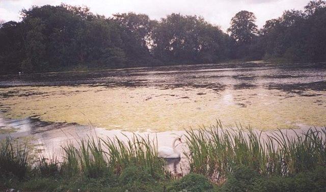 The Lake at Sudbury Hall - geograph.org.uk - 155460