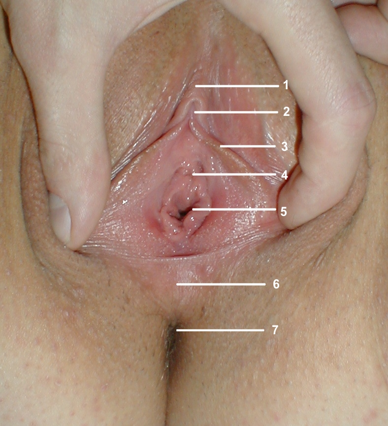 Your place Vaginal penetration with foreign object pics was specially