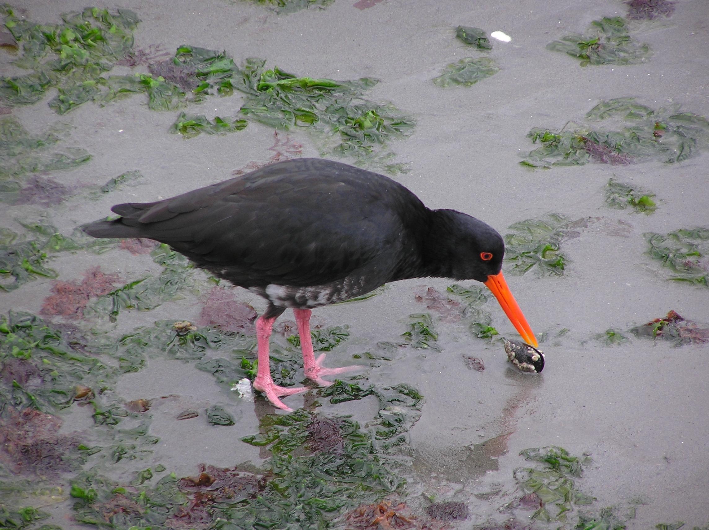 neuseeland vögel kreuzworträtsel