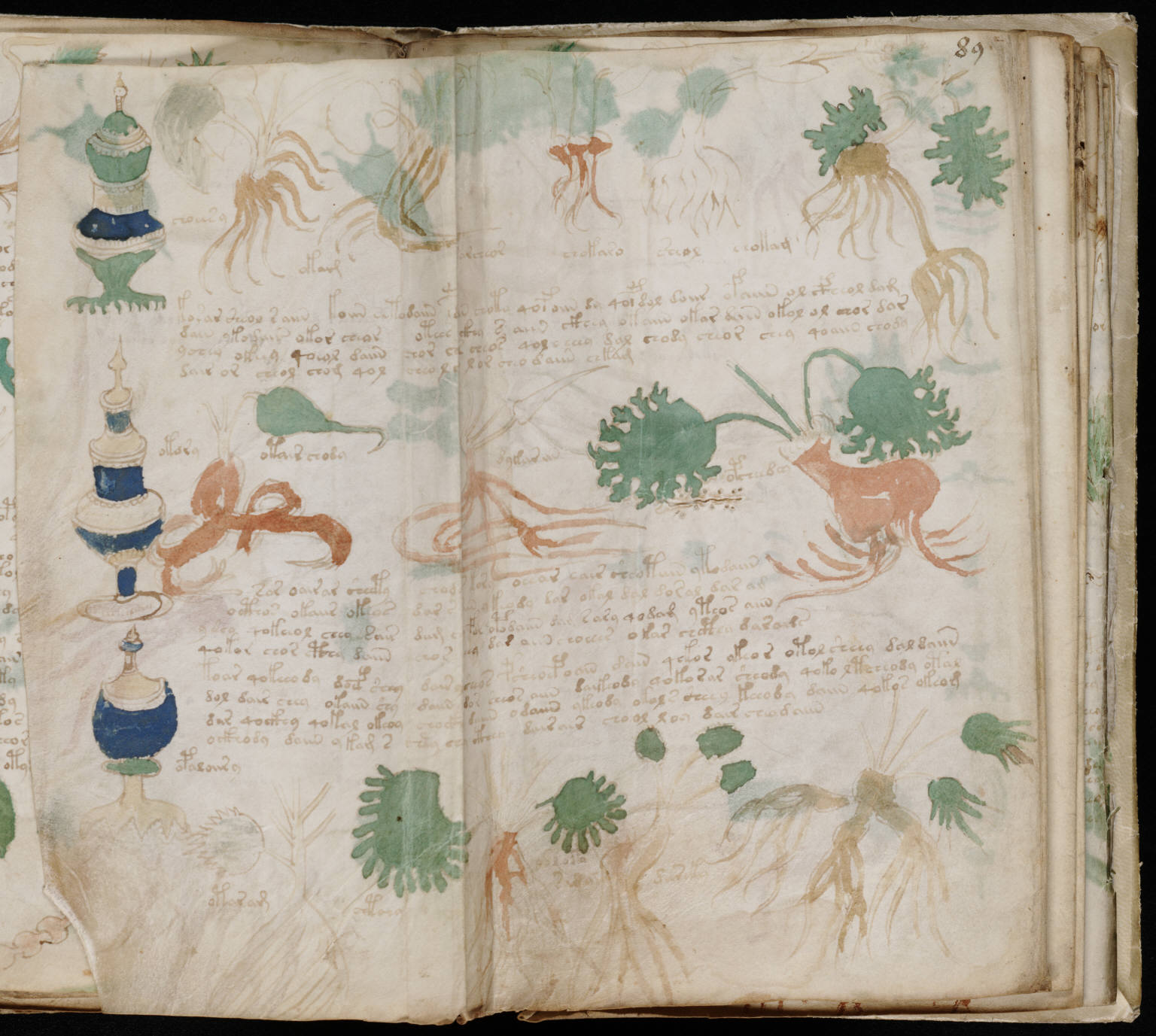 Voynich Manuscript %28163%29 ヴォイニッチ手稿(写本) どの言語にも属さない謎の文字!