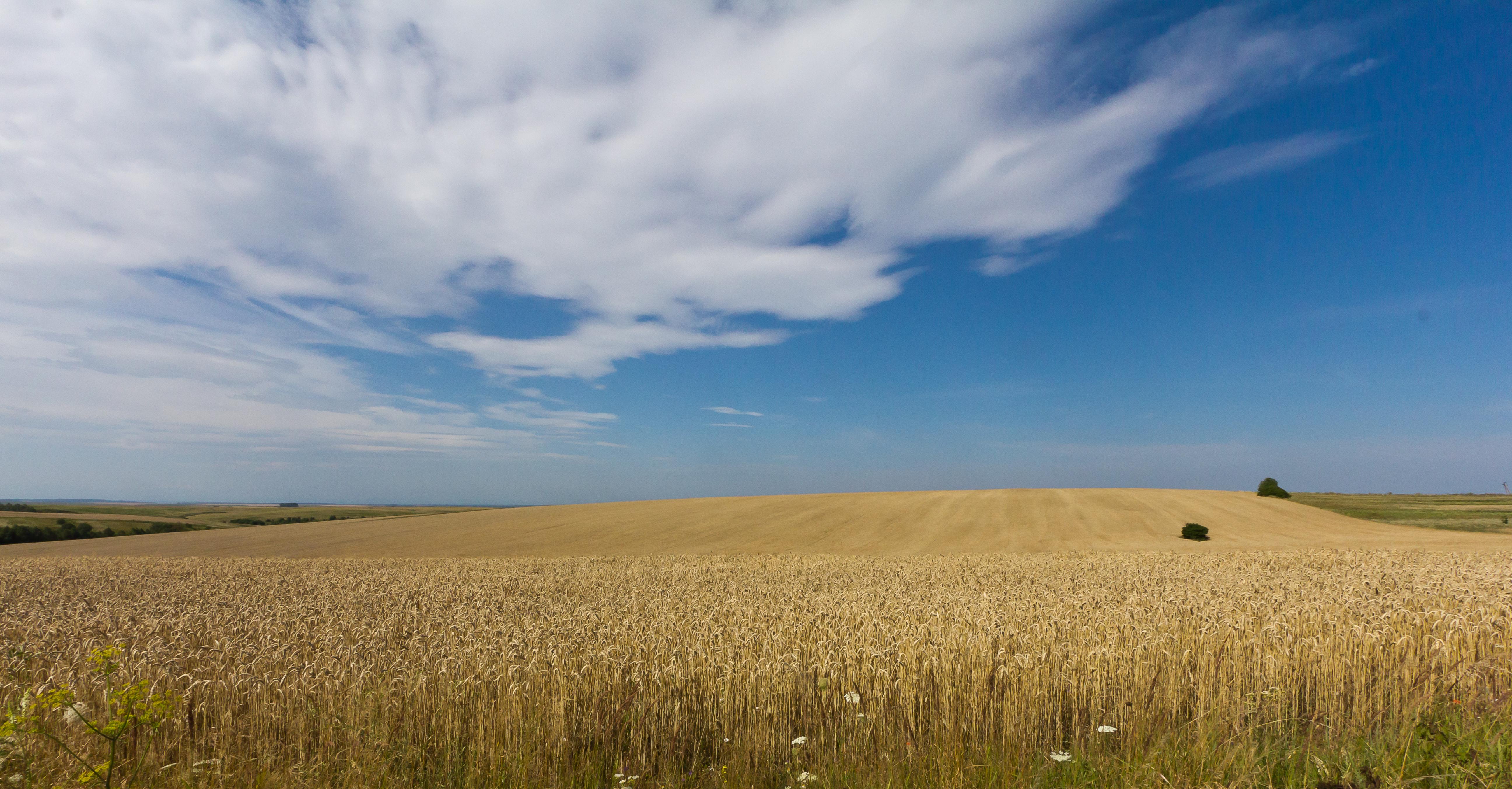 file wheat fields in ukraine 5965 jpg wikimedia commons clipart earth free clipart earth's creation