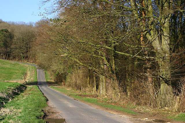 Wychwood Forest at Hatching Hill - geograph.org.uk - 358831