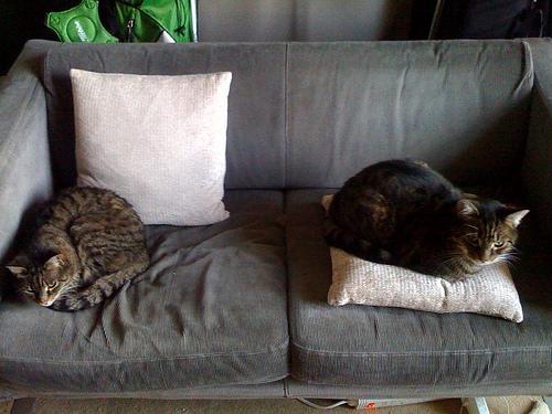 Exceptionnel File:A Cats Sofa (3842235026)