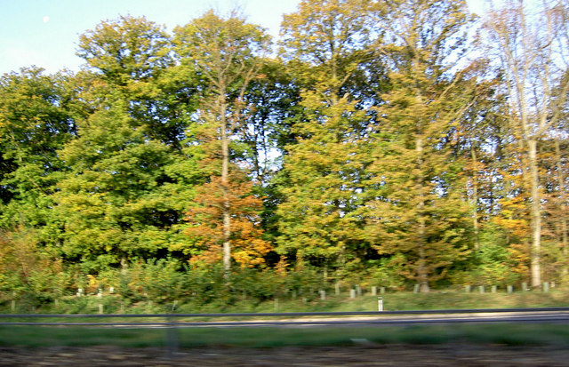 Autumn colours near Silverstone - geograph.org.uk - 599129
