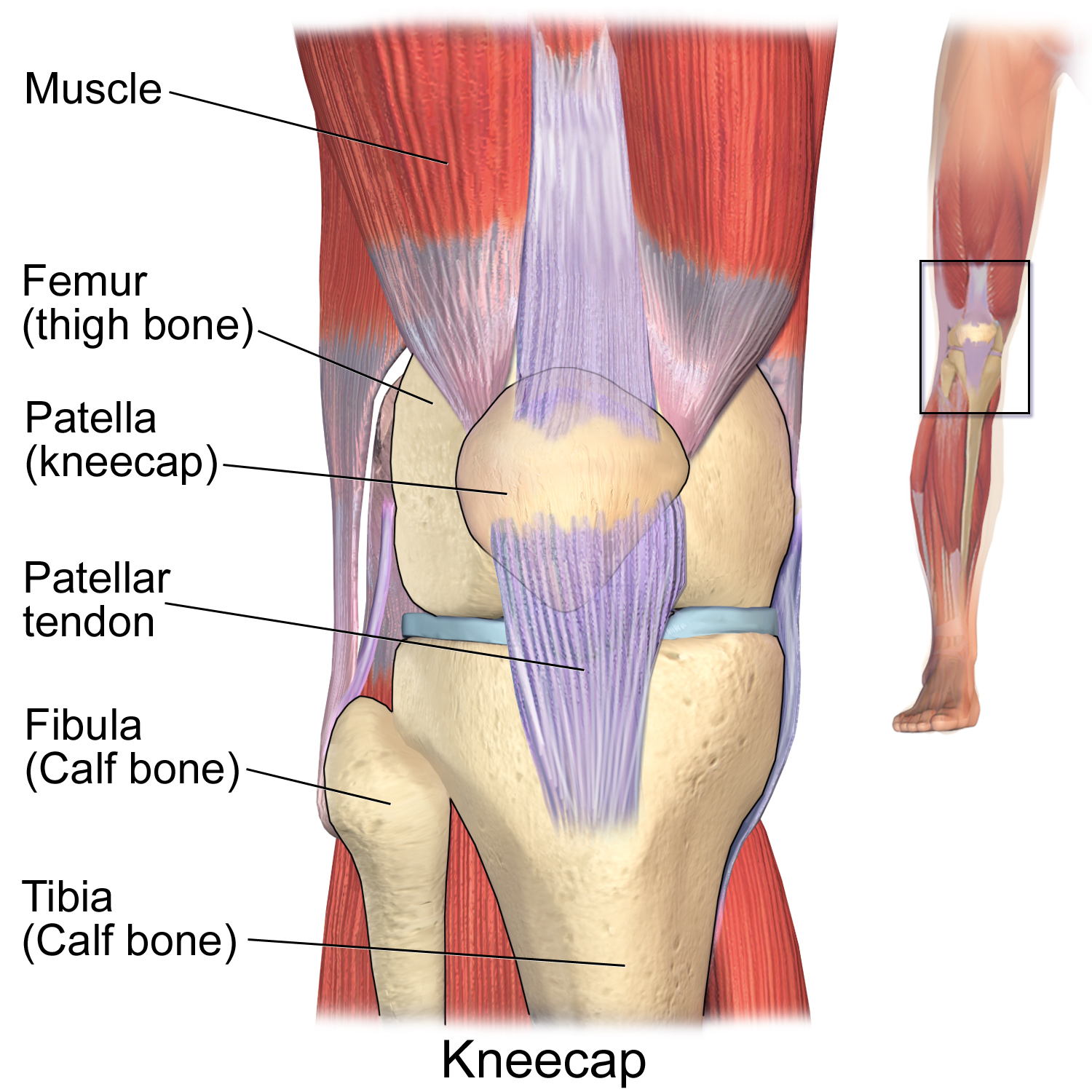 Knee Pain From Running - Recovery Tips and Advise