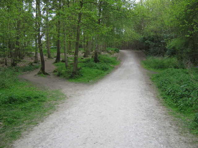 Bridleway in Tottenden Wood - geograph.org.uk - 1290960