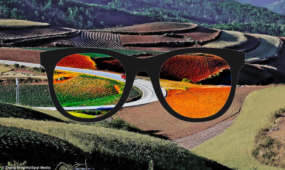 File:Enchroma Lens.png - Wikiversity