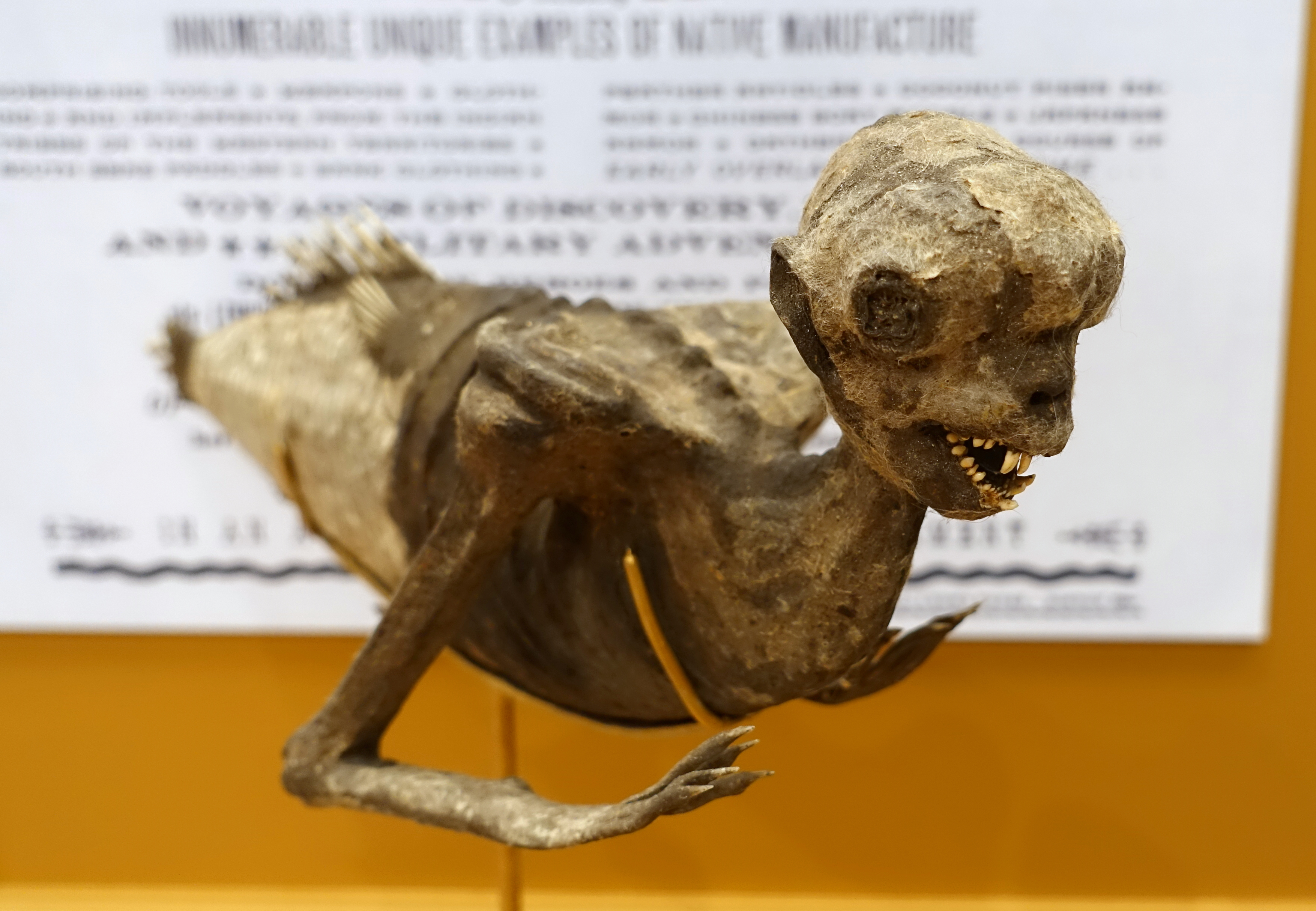 An image of the famous 1840s Feejee mermaid.