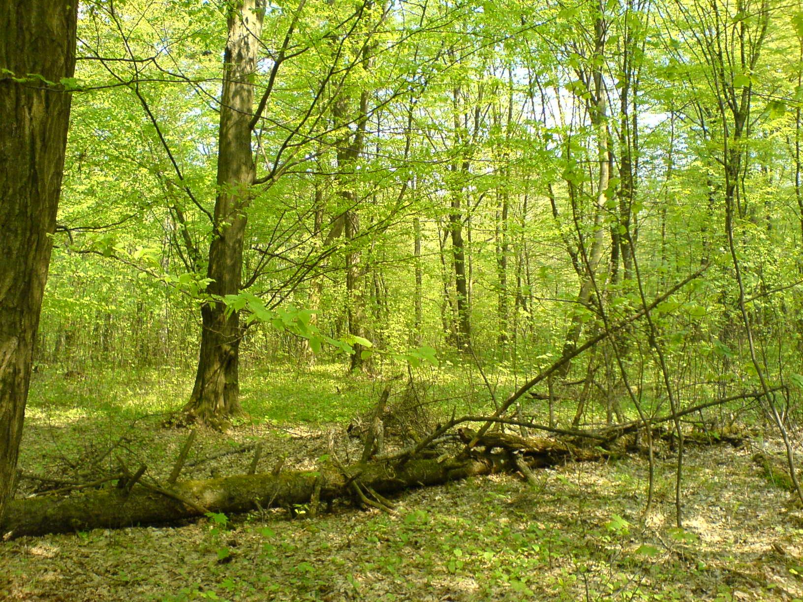 area cyprus larnaca property sale