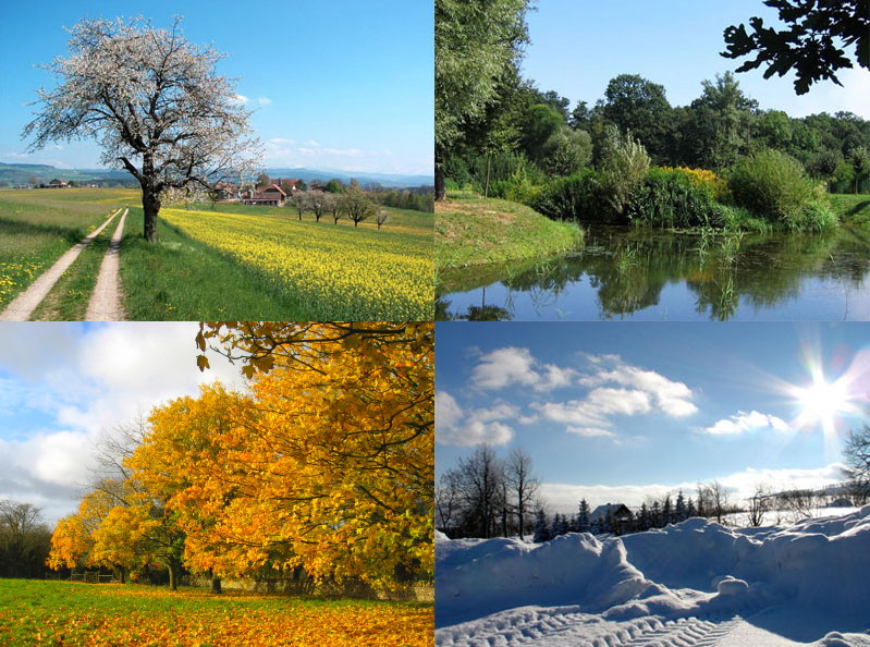 A collage showing an image from each of the four seasons