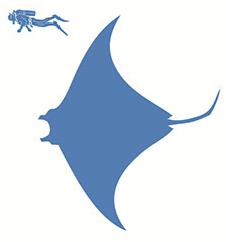 Giant ocean manta size.png