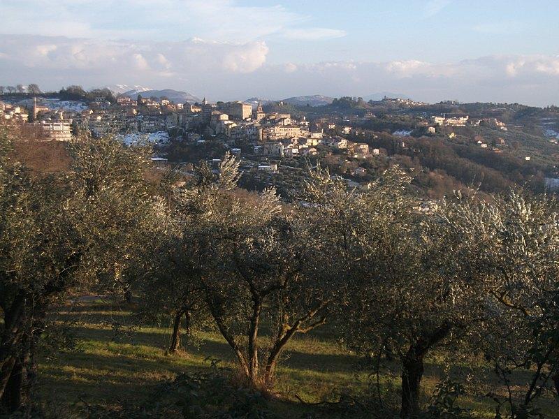 File:Gli ulivi e Poggio Mirteto.jpg